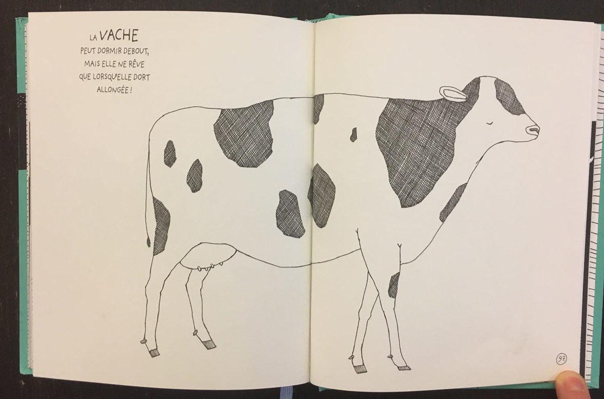 Faits étonnants sur la vache