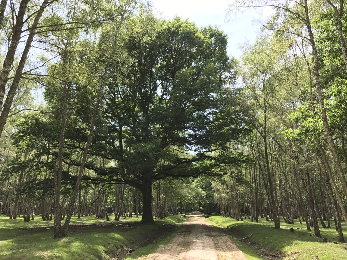 forêt sauvage espace rambouillet