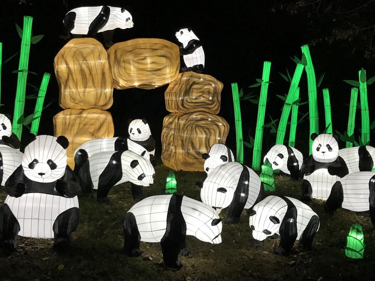 Les Especes En Voie D Illumination Au Jardin Des Plantes Expo