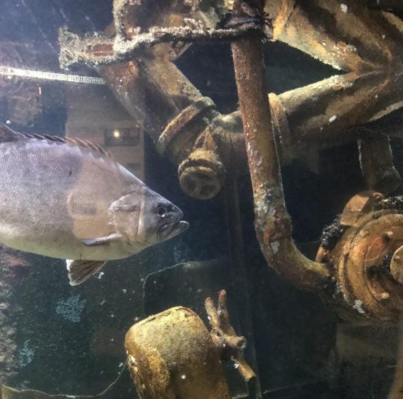 Musée de la pêche en mer - Etaples sur mer
