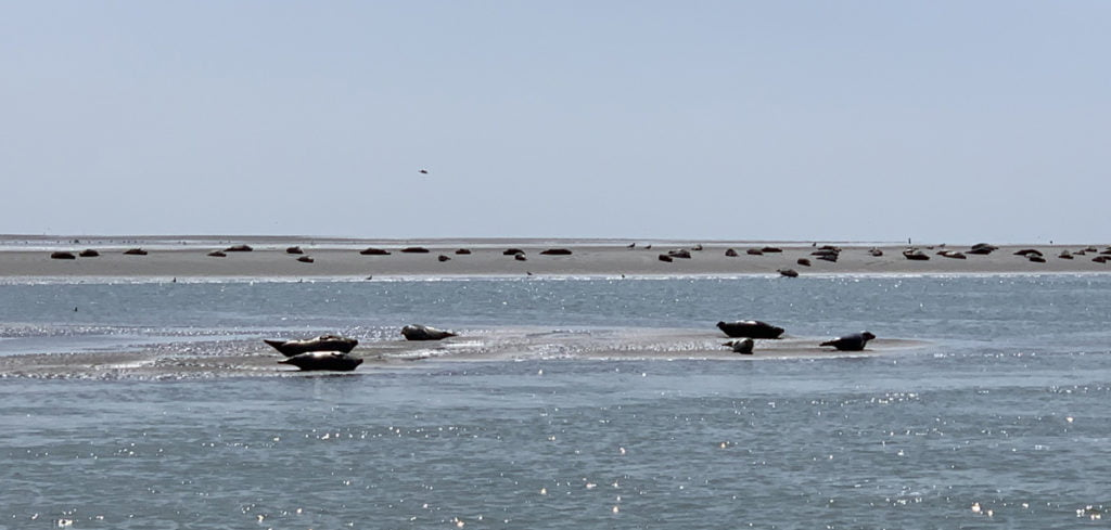 Les Phoques de Bercks sur Mer