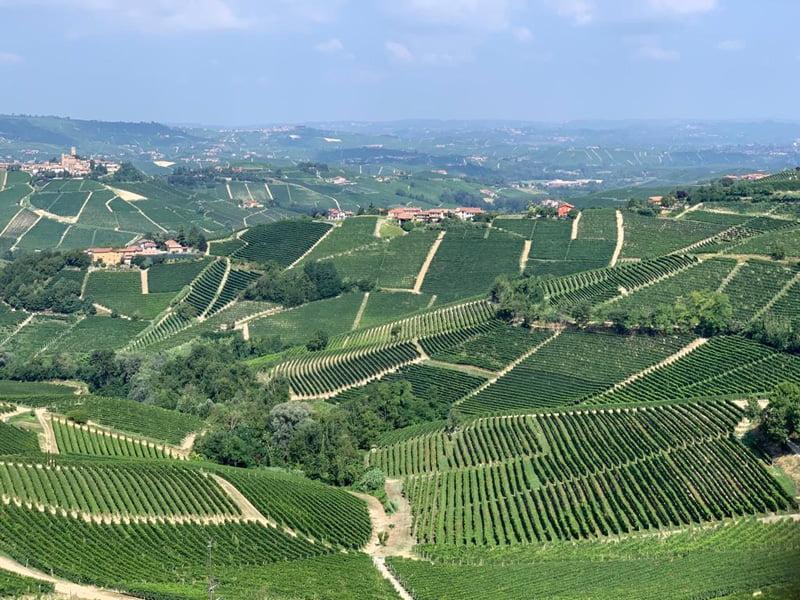 Les vignes de Barolo